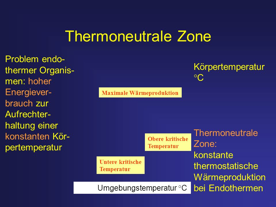 Thermoneutrale Zone Problem endo- Körpertemperatur °C thermer Organis-