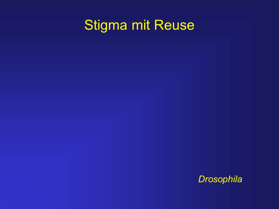 Stigma mit Reuse Drosophila