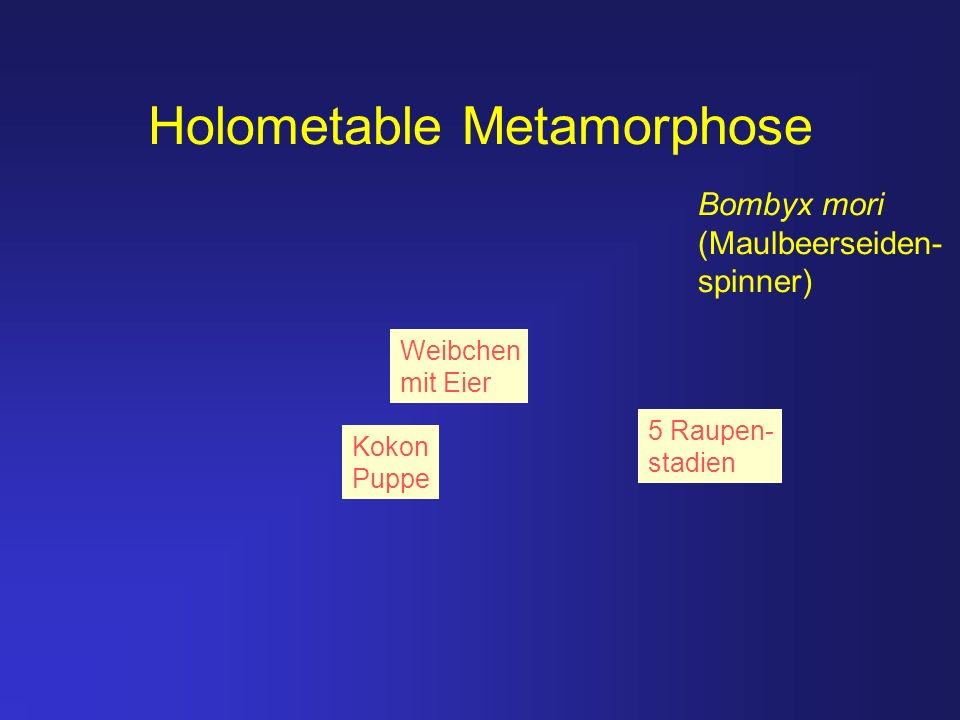 Holometable Metamorphose