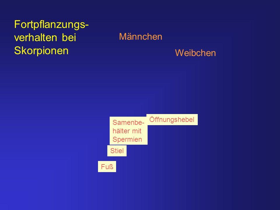 Internetversion 2003 Teil III - ppt herunterladen