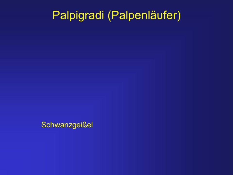 Palpigradi (Palpenläufer)