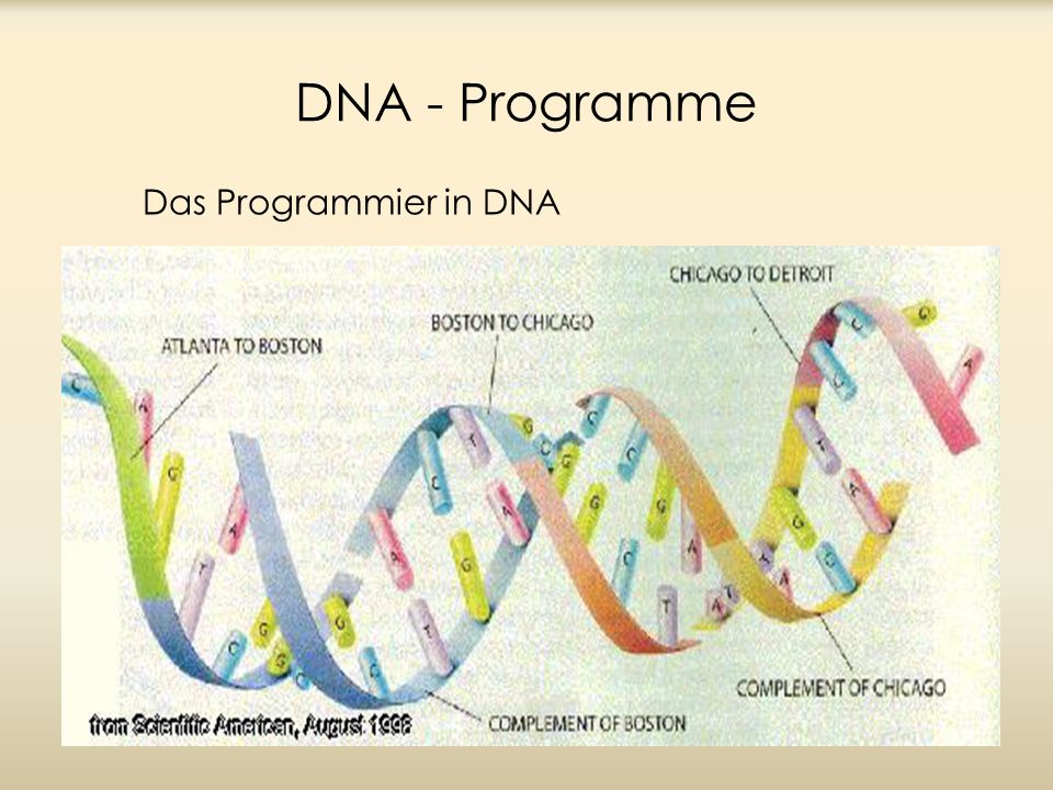 DNA - Programme Das Programmier in DNA