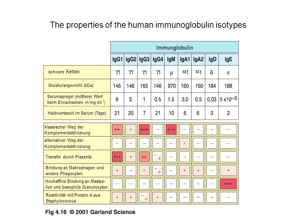 The properties of the human immunoglobulin isotypes