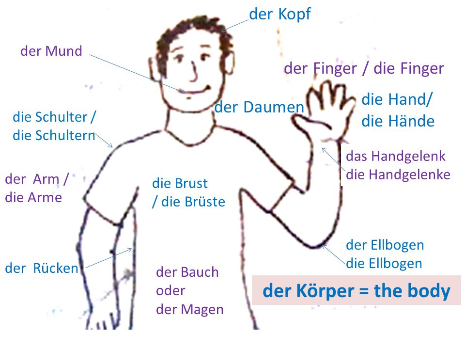 der Körper = the body der Kopf der Finger / die Finger - ppt ...