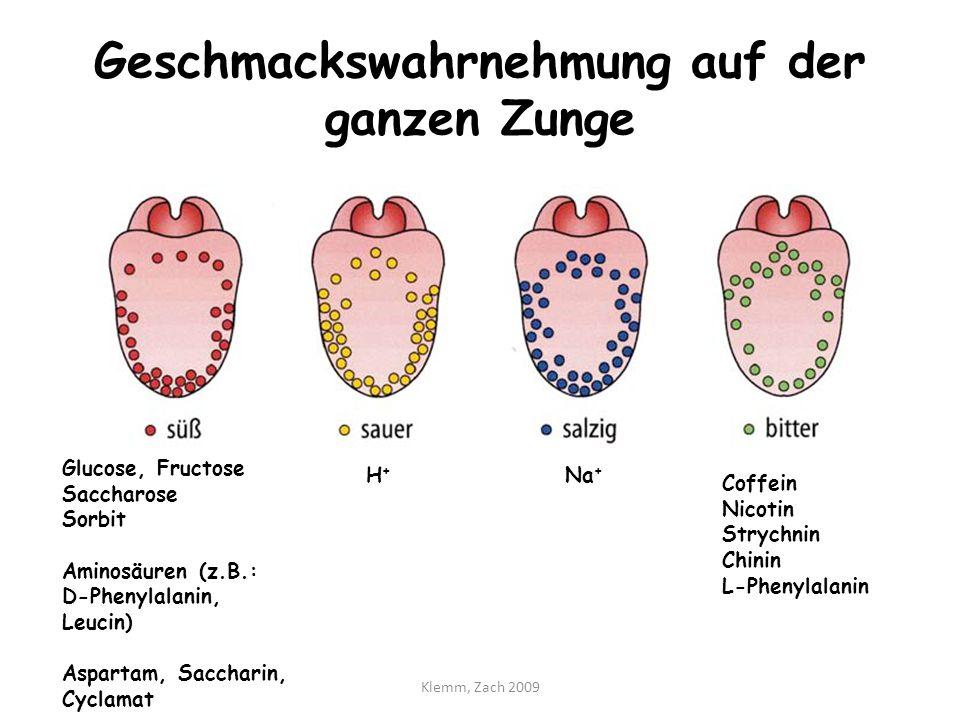 Der Geschmackssinn und die Analyse der Nahrung - ppt video online ...