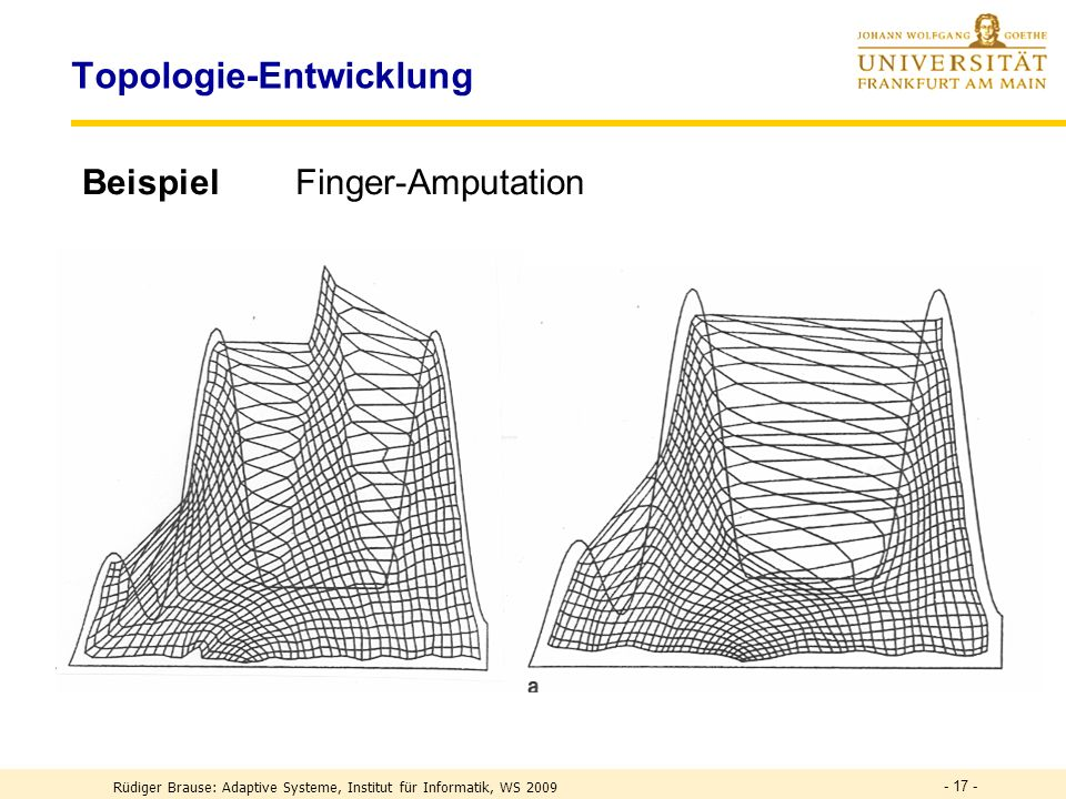 Topologie-Entwicklung
