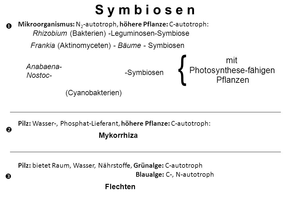 Photosynthese-fähigen