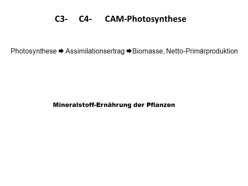 C3- C4- CAM-Photosynthese