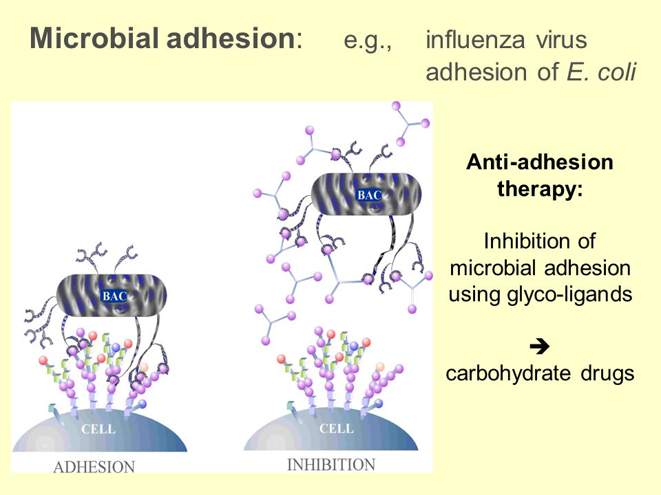 Inhibition of microbial adhesion using glyco-ligands