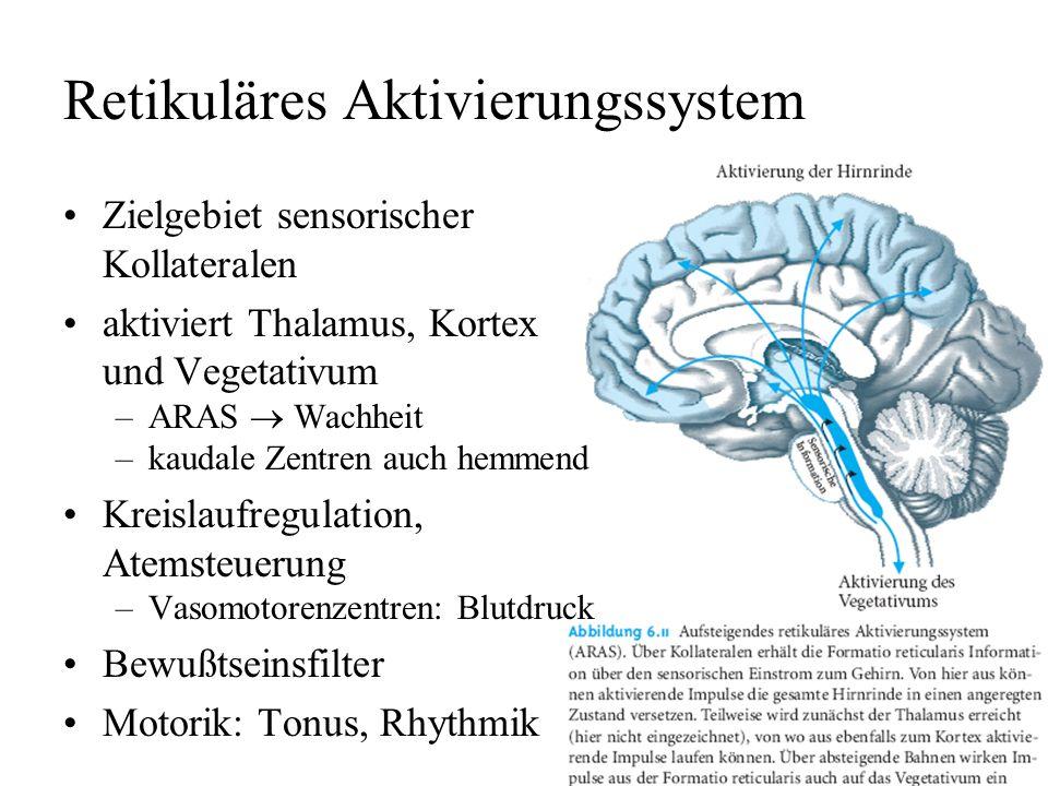 Vorlesung Biologische Psychologie C. Kaernbach - ppt video online ...