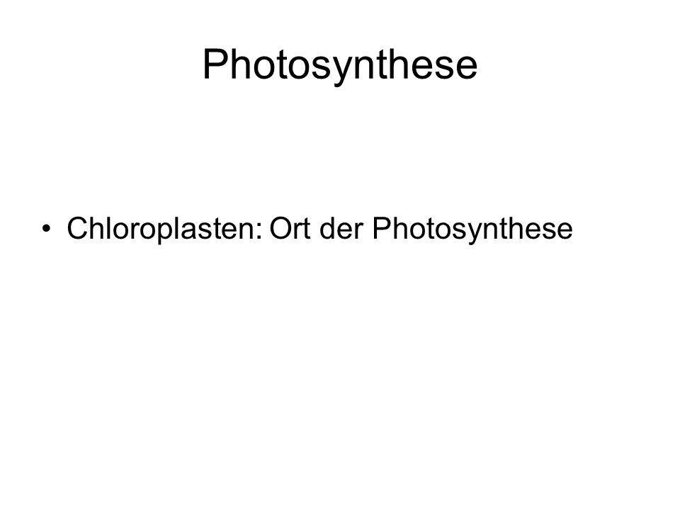 Photosynthese Chloroplasten: Ort der Photosynthese
