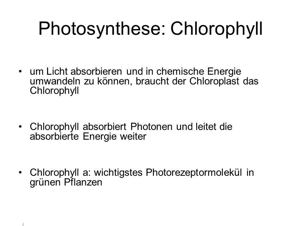 Photosynthese: Chlorophyll