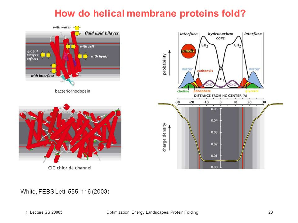 How do helical membrane proteins fold