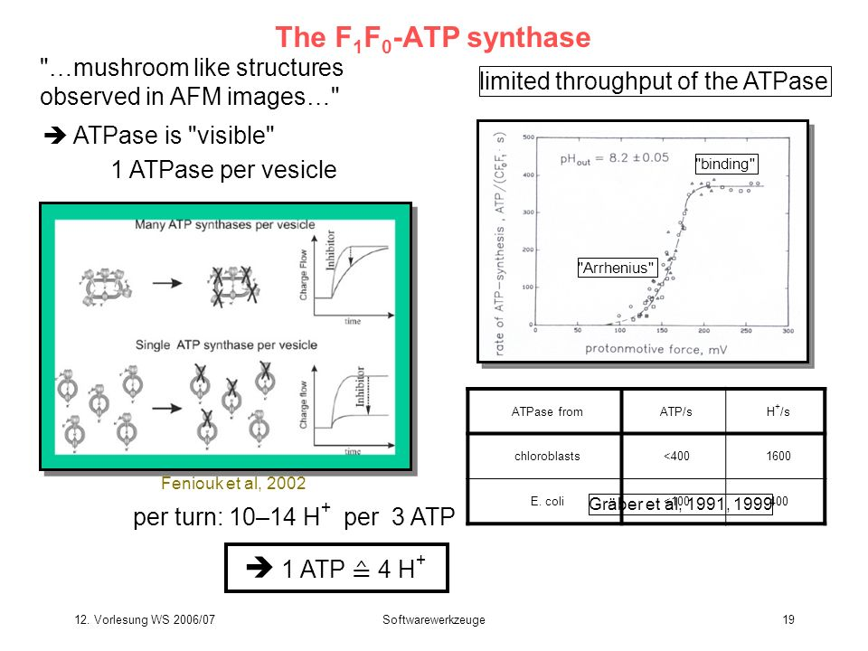 The F1F0-ATP synthase  1 ATP ≙ 4 H+