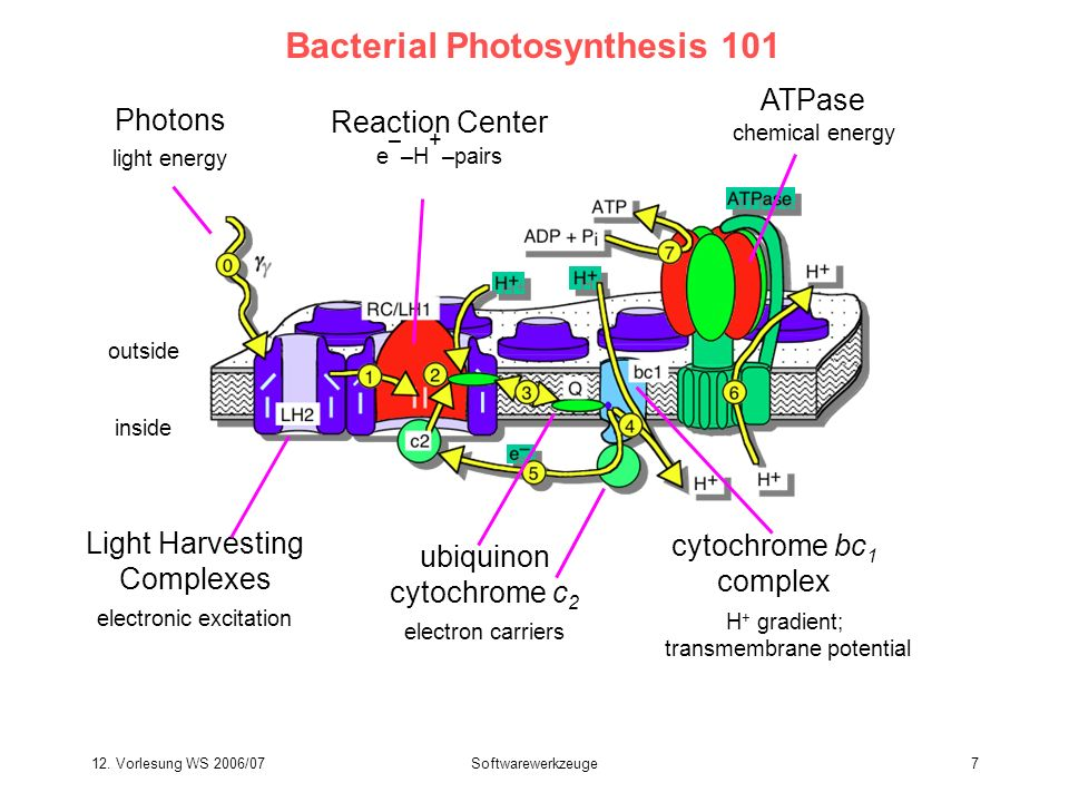 Bacterial Photosynthesis 101