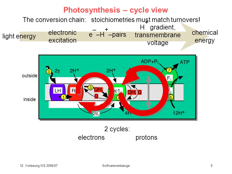 Photosynthesis – cycle view