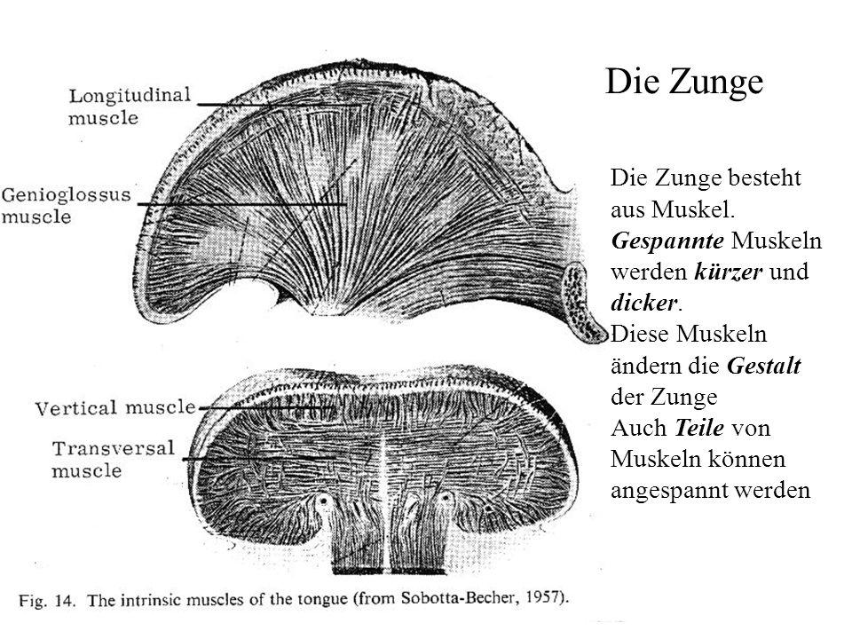 Ungewöhnlich Mundboden Anatomie Zeitgenössisch - Anatomie Ideen ...