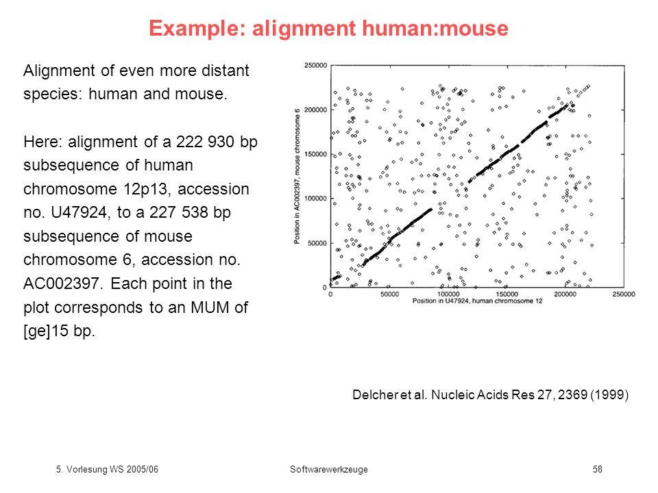 Example: alignment human:mouse
