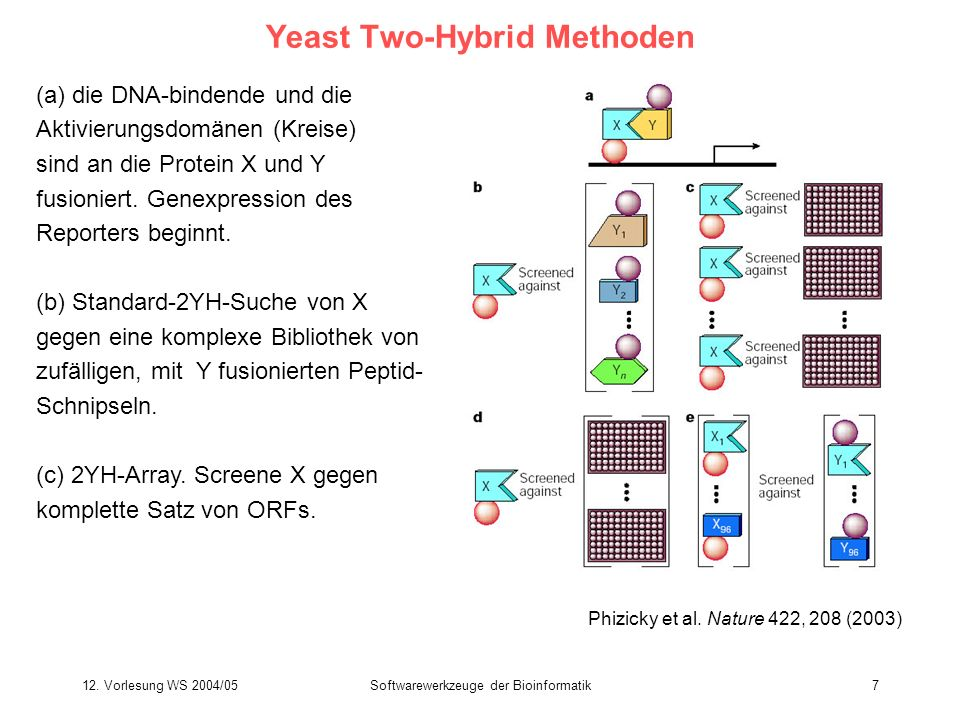 Yeast Two-Hybrid Methoden
