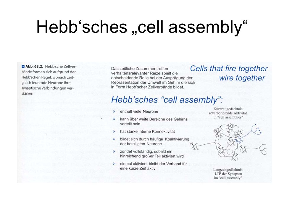 "Hebb'sches ""cell assembly"