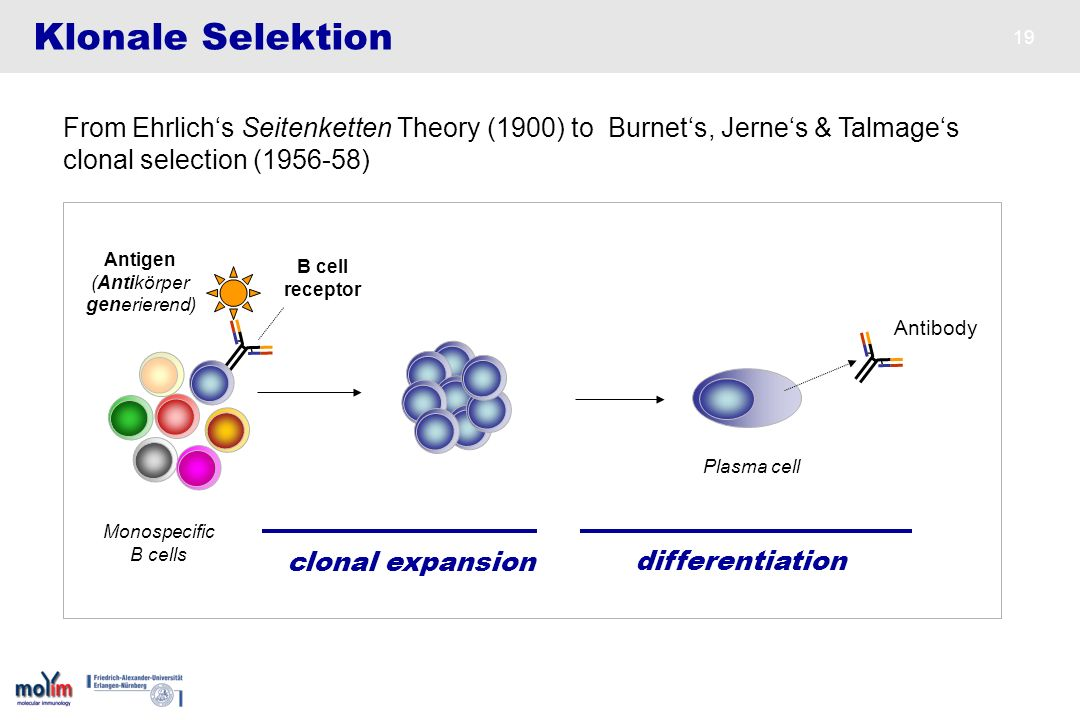 Klonale Selektion From Ehrlich's Seitenketten Theory (1900) to Burnet's, Jerne's & Talmage's. clonal selection ( )