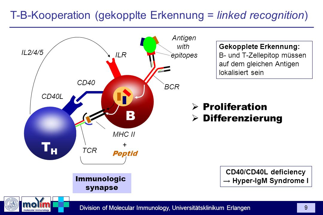 B TH T-B-Kooperation (gekopplte Erkennung = linked recognition)