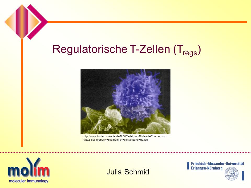 Regulatorische T-Zellen (Tregs)