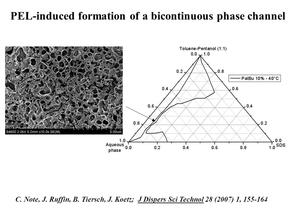 PEL-induced formation of a bicontinuous phase channel