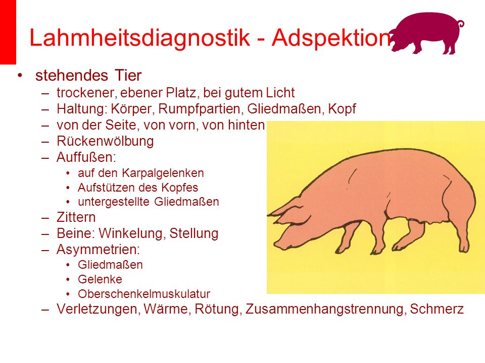 Lahmheitsdiagnostik - Adspektion