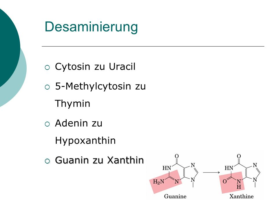 Desaminierung Cytosin zu Uracil 5-Methylcytosin zu Thymin