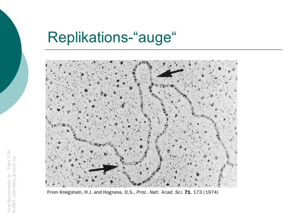 Replikations- auge Page 1139 © 2004 John Wiley & Sons, Inc.