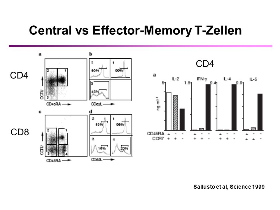 Central vs Effector-Memory T-Zellen