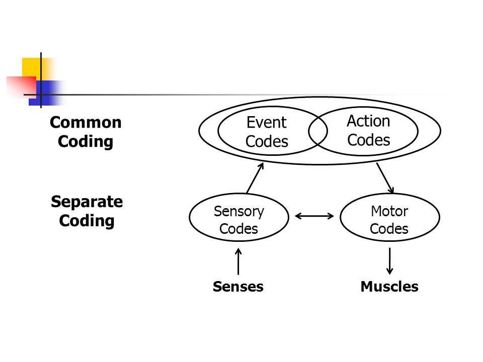 Common Coding Separate Coding