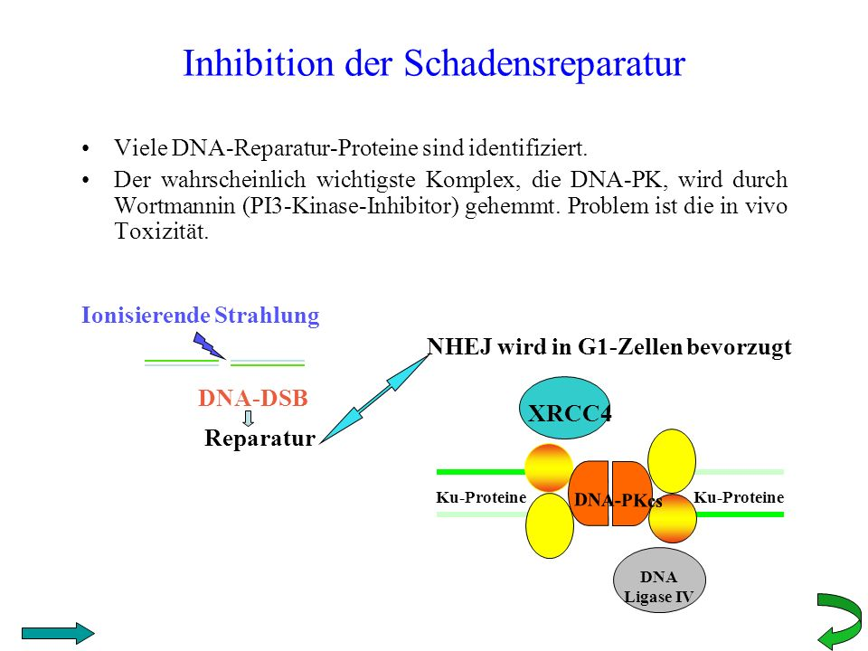 Inhibition der Schadensreparatur