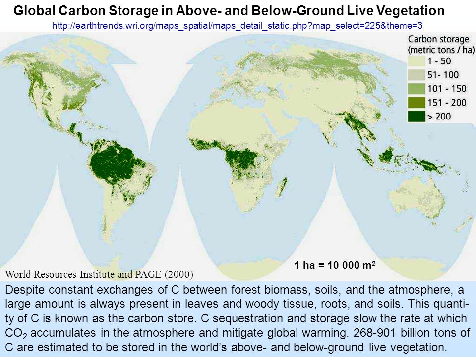 Global Carbon Storage in Above- and Below-Ground Live Vegetation