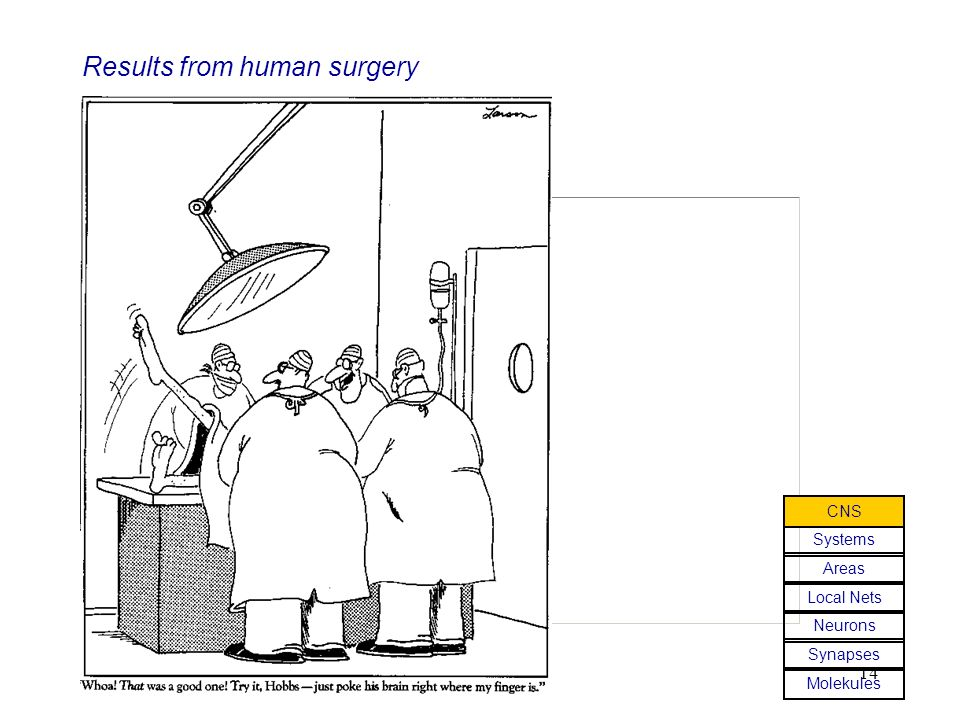 Results from human surgery