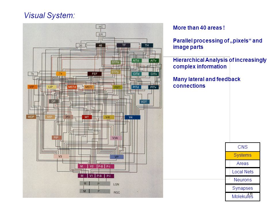 Visual System: More than 40 areas !