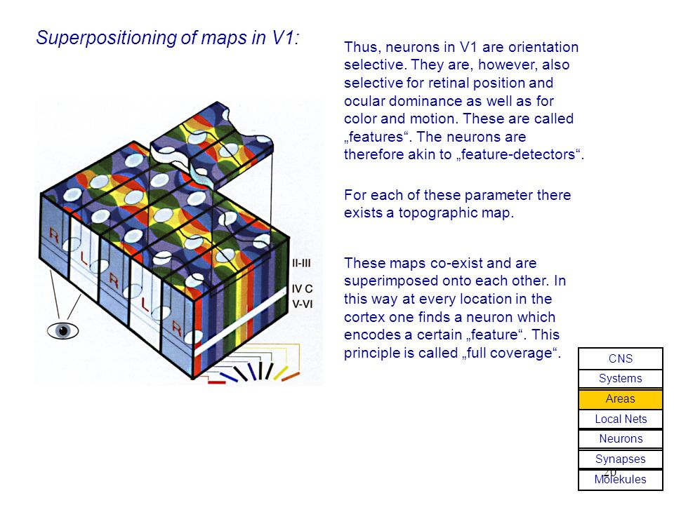 Superpositioning of maps in V1: