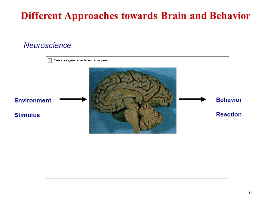 Different Approaches towards Brain and Behavior