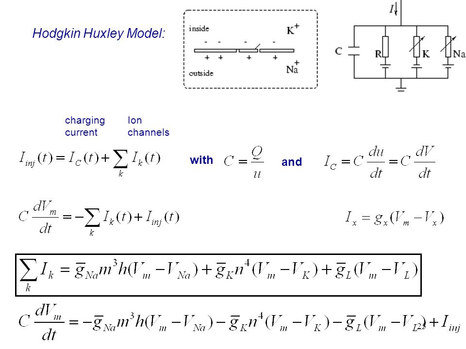 Hodgkin Huxley Model: charging current Ion channels with and