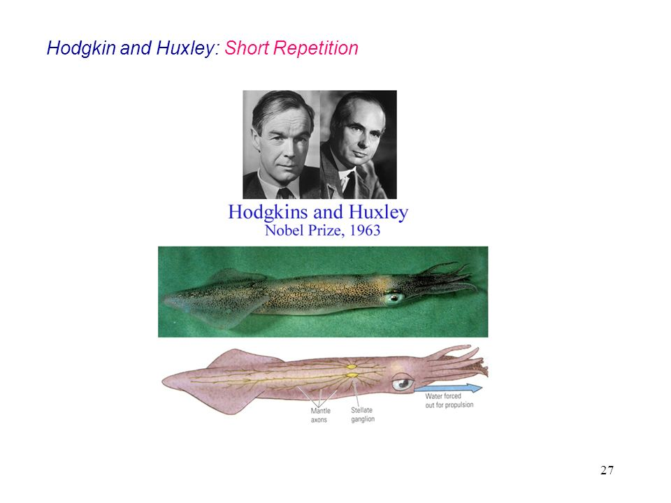 Hodgkin and Huxley: Short Repetition