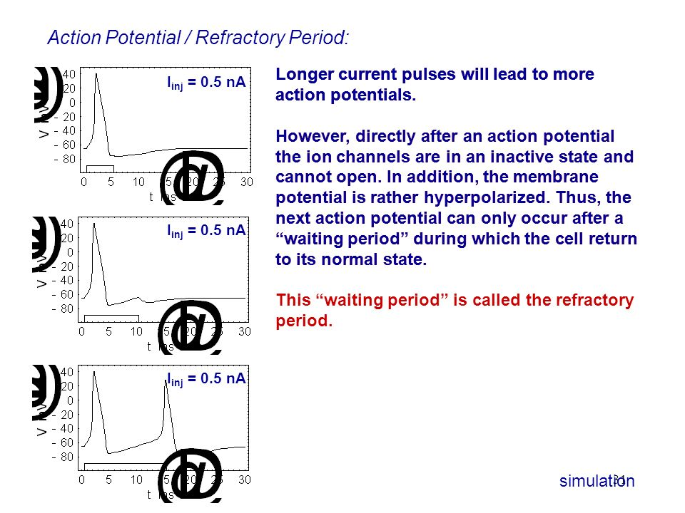 Action Potential / Refractory Period: