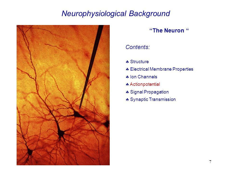Neurophysiological Background