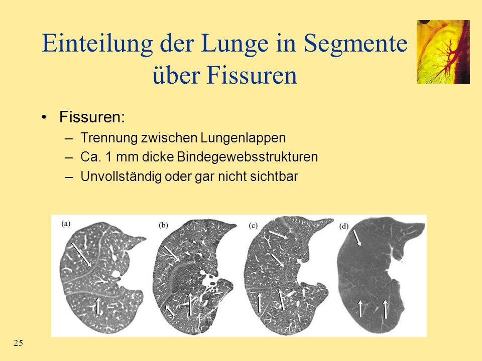 Fein Lungensegmente Ct Anatomie Fotos - Anatomie Von Menschlichen ...