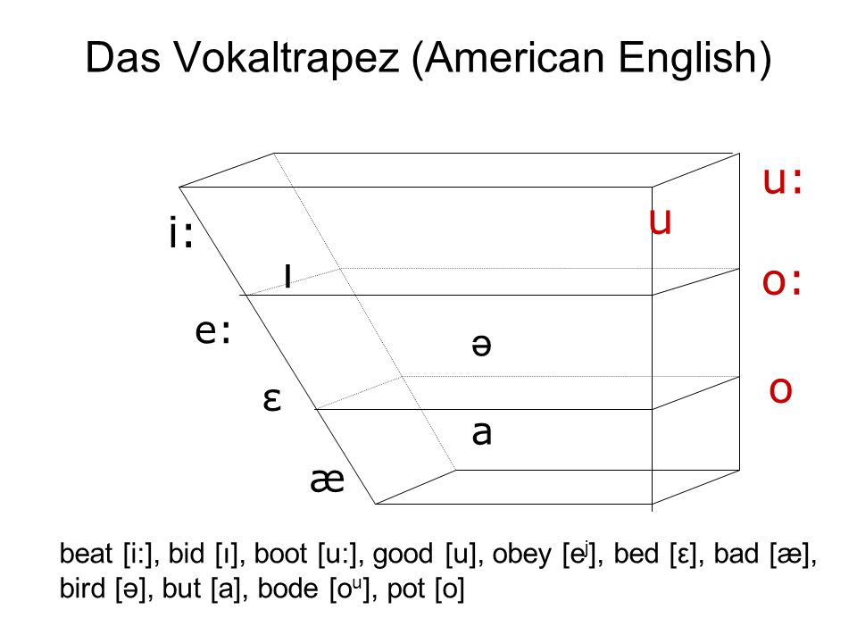 Das Vokaltrapez (American English)