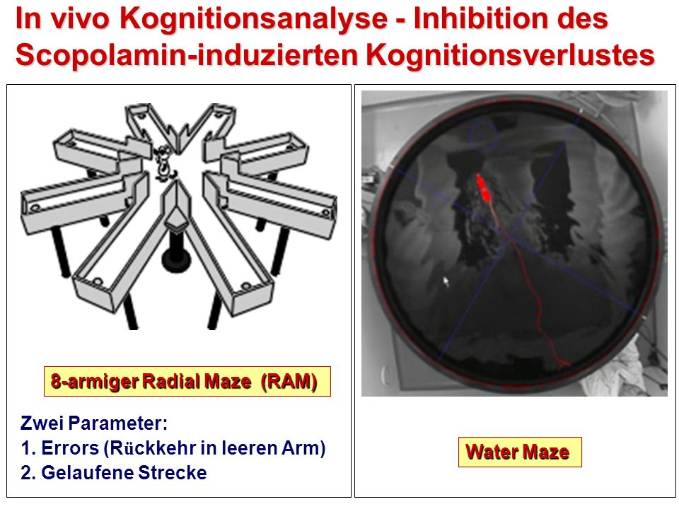 In vivo Kognitionsanalyse - Inhibition des Scopolamin-induzierten Kognitionsverlustes