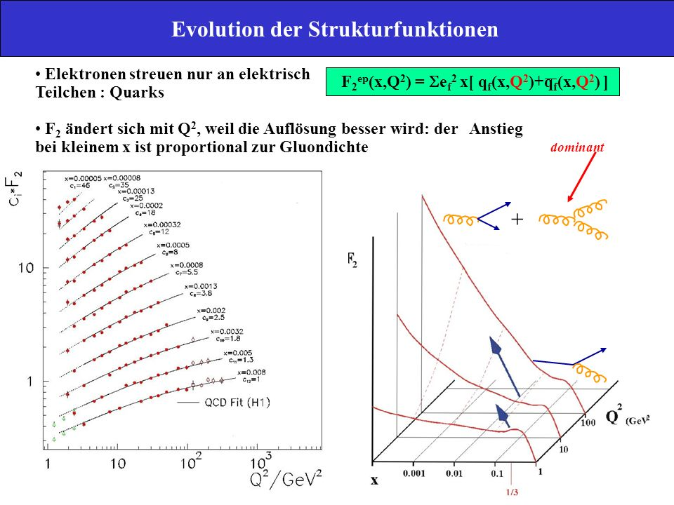 Evolution der Strukturfunktionen
