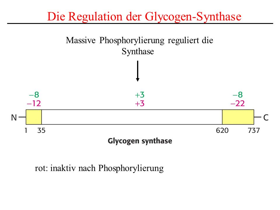 Massive Phosphorylierung reguliert die