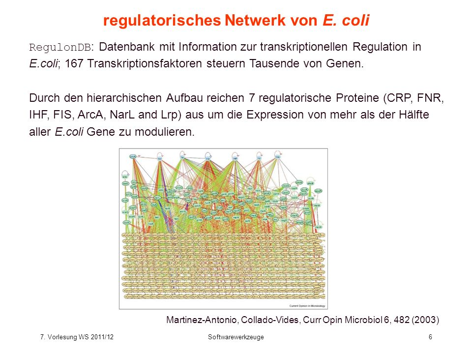 regulatorisches Netwerk von E. coli
