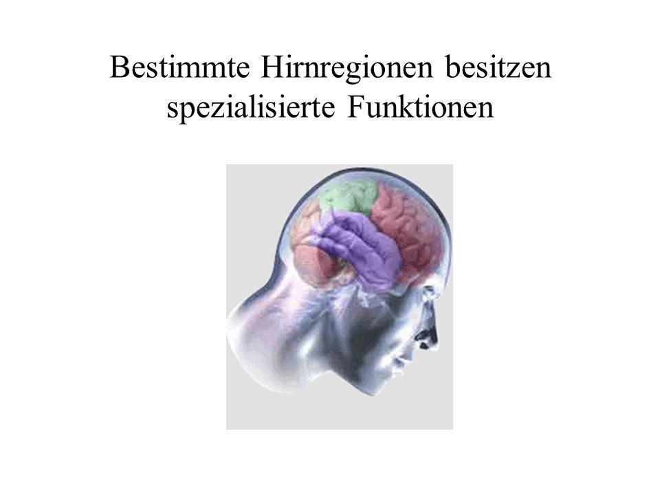 aus Sicht der Neuropsychologie - ppt video online herunterladen